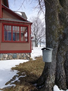 Maple sugaring time at HIllside Homestead.
