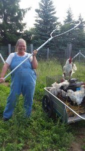 Catching free ranging birds is harder than broilers